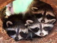Обитатели самарского зоопарка
