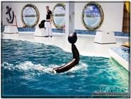 Представление в дельфинарии в Евпатории