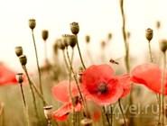 На полях Фландрии. По местам сражений Первой мировой войны
