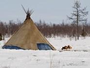 Традиционное жилище оленеводов-кочевников