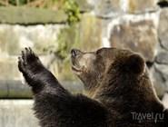 Общительный калининградский медведь