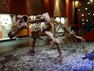 В Музее пермских древностей