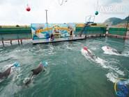 Представление в дельфинарии в Большом Утрише