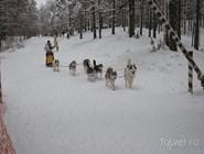 """Международные гонки на собачьих упряжках """"По земле Сампо"""""""