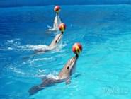 """Представление в дельфинарии """"Аква-Мир"""""""