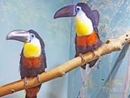 Птицы в экзотариуме в Лазаревском дельфинарии