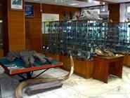 Мамонтенок Дима в  Геологическом музее