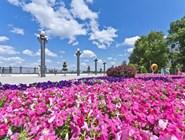 Цветы на набережной в Анапе