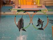 Представление в геленджикском дельфинарии