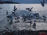 Море в Геленджике зимой
