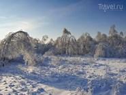 Деревья, покрытые льдом. Подмосковье