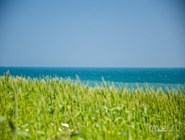 На холмах над морем находятся засеянные поля...