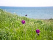 ...и цветущие луга