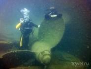 Погружения проходят на небольшой глубине, обычно до 20 метров