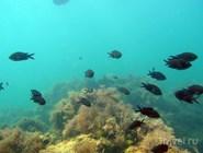 Подводный мир Благовещенской весьма богат