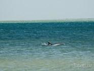В Сенном можно увидеть самого настоящего дельфина