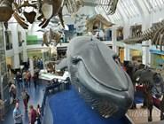 В Музее естествознания