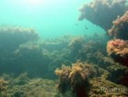 Живописные подводные миры Бугазской косы
