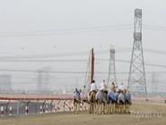 Поле для верблюжьих бегов