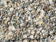 Ракушки на пляже в Ильиче