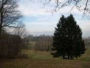 Лес рядом с Цюрихом