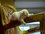 Кошки любят отдыхать на огромном царском троне