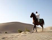 Традиционный уклад жизни в пустыне
