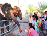 Кормление слонов в Emirates Park Zoo