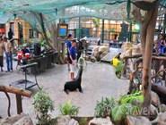 Представление с морскими котиками в Emirates Park Zoo