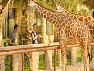 Встреча с жирафами в Emirates Park Zoo