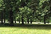 Гайд-парк в Лондоне. Фото: geocities.com