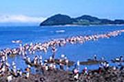 """Фестиваль """"Разделение моря Чиндо"""". Фото: tour2korea.com"""