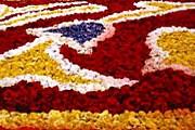 Цветочный ковер в Брюсселе. Фото: www.pbase.com