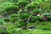 Японский сад. Фото: tours.ru