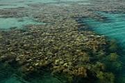 Коралловый риф. Фото: photosight.ru