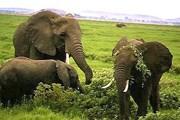 Национальный парк Amboseli в Кении // de.geocities.com