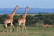 Новый год в Кении будет экзотическим. // GettyImages