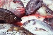 Берег Карибского моря покрыт мертвой рыбой. // GettyImages