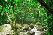 Тропический лес необходимо сохранить. // verderio.ru