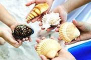 В США детей научат собирать ракушки. // GettyImages