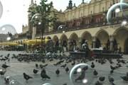 Достопримечательности Кракова будут показывать лицензированные гиды. // chuda777.republika.pl