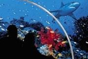 Самый большой океанариум появится в Москве. // schoolhotels.com