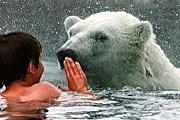 Белые медведи – одни из самых опасных хищников. // fogonazos.blogspot.com