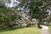 Сезон ураганов на Карибах // Google.com