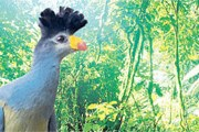 Уганда будет развивать экотуризм. // timesonline.co.uk