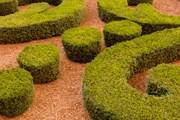 Парижане сделают из елок удобрения. // GettyImages