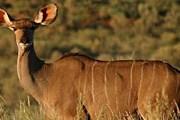 Редкие животные – в заповеднике Gondwana. // gondwanagamereserve.com