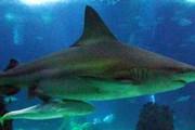 В океанариуме - 8 тыс. морских обитателей. // oceanario.pt