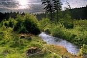 Лес близ села Ванавара. // irkutsk.com
