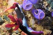 Рифовые рыбы не могут существовать без кораллов. // nemo.ru